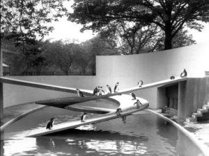 Penguin Pool, London Zoo © ZSL