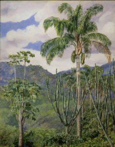 View in Brazil near Ouro Preto with Oli Palms © RBG Kew
